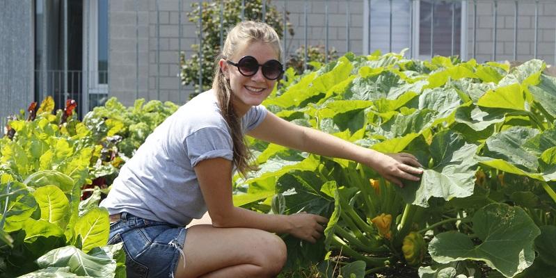 job offer urban agriculture summer internships santropol roulant. Black Bedroom Furniture Sets. Home Design Ideas