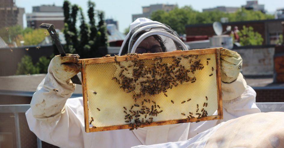 Une personne en habit apicole regarde un rayon de miel avec des abeilles.